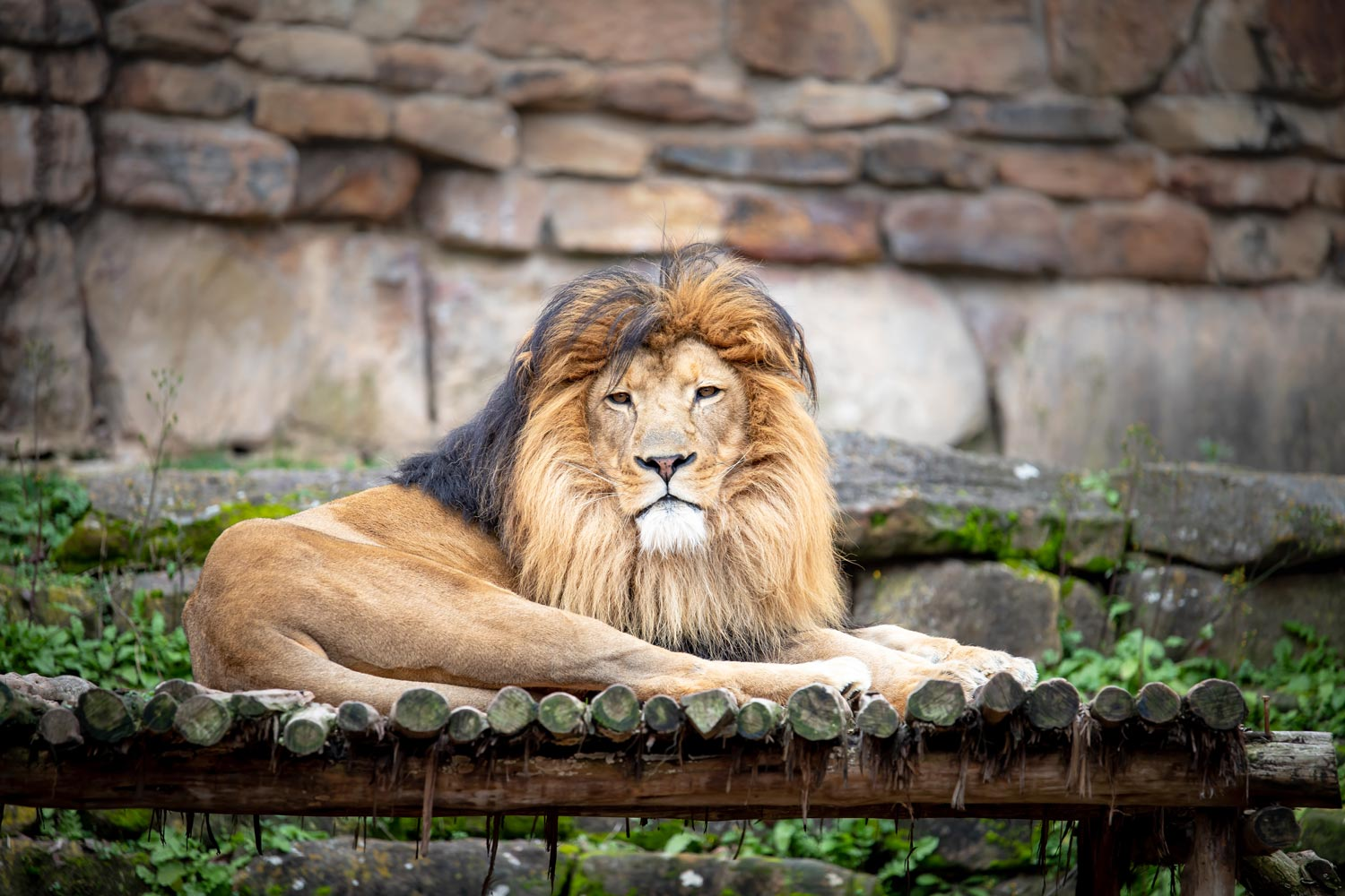 Zoo animals also affected by climate change